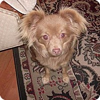 Adopt A Pet :: Butterscotch-Only $75 adoption - Litchfield Park, AZ