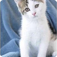 Adopt A Pet :: Houdini - Columbus, OH