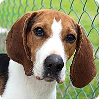 Adopt A Pet :: Iridesa - Dallas, TX