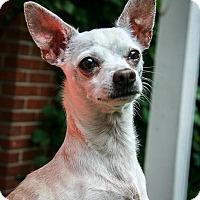 Adopt A Pet :: Casper - Detroit, MI