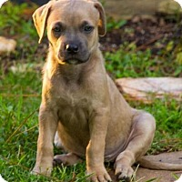 Adopt A Pet :: Skylar - New Orleans, LA