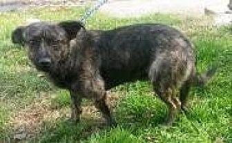 Feist Mix Dog for adoption in Prestonsburg, Kentucky - kendrick