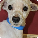 Adopt A Pet :: Carlton