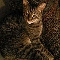 Adopt A Pet :: LEV - COURTESY - Los Angeles, CA