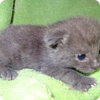 Adopt A Pet :: Annabeth - Bentonville, AR