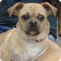 Adopt A Pet :: PeeWee - Orlando, FL