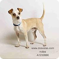 Adopt A Pet :: Felix - Snohomish, WA
