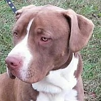Adopt A Pet :: Zeus - Lexington, KY