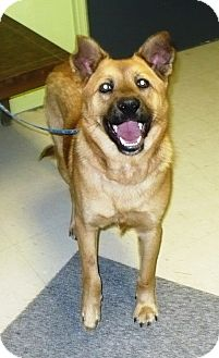 German Shepherd Dog/Black Mouth Cur Mix Dog for adoption in Eastpoint, Florida - Tank