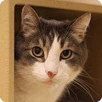 Adopt A Pet :: Robbie - Ventura, CA