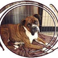 Adopt A Pet :: Holyfield - Las Vegas, NV