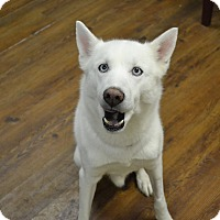 Husky Mix Dog for adoption in Lake Odessa, Michigan - Rock E