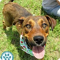 Adopt A Pet :: Nick - Kimberton, PA