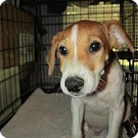 Adopt A Pet :: Phillip - Rocky Mount, NC