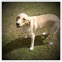 Adopt A Pet :: DORY - Medford, WI