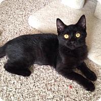 Adopt A Pet :: Sabrina - Charlotte, MI