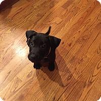 Adopt A Pet :: Ramsey - Waxhaw, NC