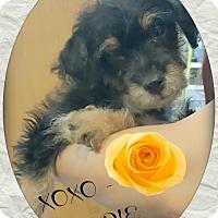 Adopt A Pet :: Noodle - Los Angeles, CA
