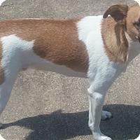 Adopt A Pet :: Billy - Providence, RI