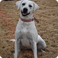 Labrador Retriever Mix Dog for adoption in Plainfield, Connecticut - Maggie