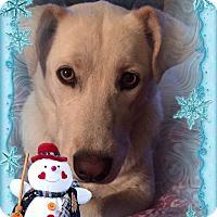 Adopt A Pet :: Marley - Colmar, PA