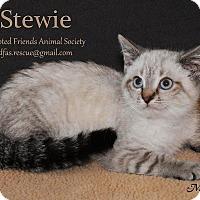 Adopt A Pet :: Stewie - Ortonville, MI