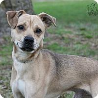 Adopt A Pet :: Byron - Troy, IL
