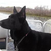 Adopt A Pet :: Maya - Lithia, FL
