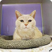 Adopt A Pet :: Betty White - Ann Arbor, MI