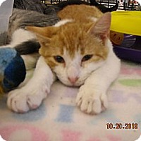 Adopt A Pet :: Nickie - Riverside, RI