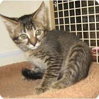 Adopt A Pet :: Nauru - Dallas, TX