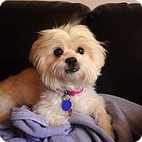 Adopt A Pet :: Samatha - Miami, FL