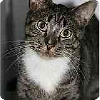 Adopt A Pet :: Isaiah - Marietta, GA