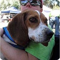 Adopt A Pet :: Max McGee - Phoenix, AZ