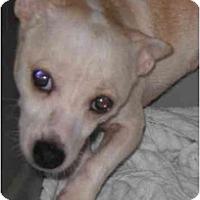 Adopt A Pet :: Dieter - Scottsdale, AZ