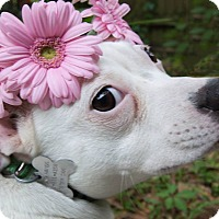 Adopt A Pet :: Puddin - Gainesville, FL