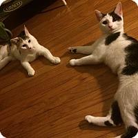 Adopt A Pet :: Cali & Daisy - Horsham, PA