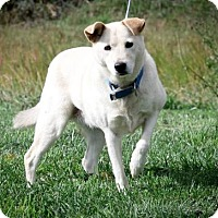 Adopt A Pet :: Paris - Dublin, VA