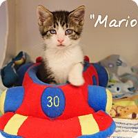 Adopt A Pet :: Mario - Ocean City, NJ