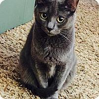 Adopt A Pet :: Rain - Piscataway, NJ
