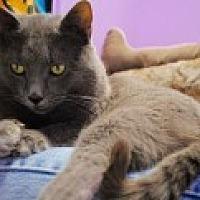 Adopt A Pet :: Smoke - Marietta, GA