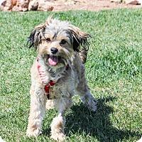 Adopt A Pet :: HARRY aka Rusty - Hurricane, UT