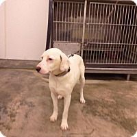 Adopt A Pet :: KATE - Upper Sandusky, OH