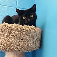 Adopt A Pet :: Morticia - Oakland, NJ
