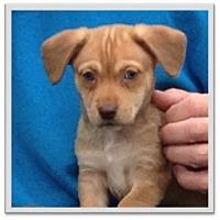 Adopt A Pet :: Chewy - Mechanicsburg, PA
