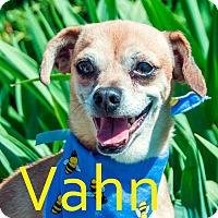 Adopt A Pet :: Vahn - Hamilton, MT