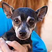 Adopt A Pet :: Little Andy - Las Vegas, NV