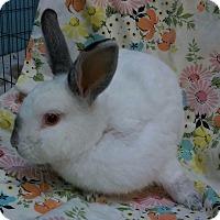Adopt A Pet :: Oliver - Montclair, CA