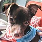 Adopt A Pet :: Talbot