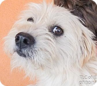 Terrier (Unknown Type, Medium) Mix Dog for adoption in Moreno Valley, California - 20160730E